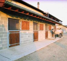 stables for horses of haras de challes