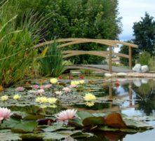 visite commentée les jardins aquatiques